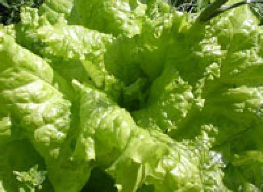 Мокрый салат