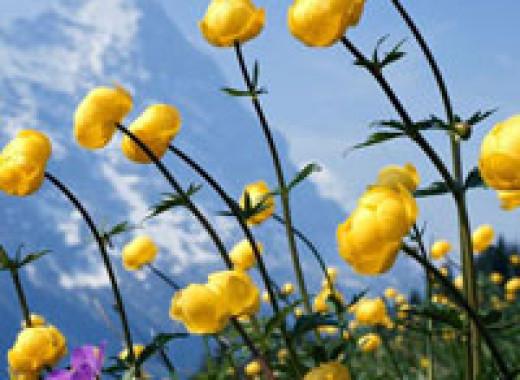 Твой цветок