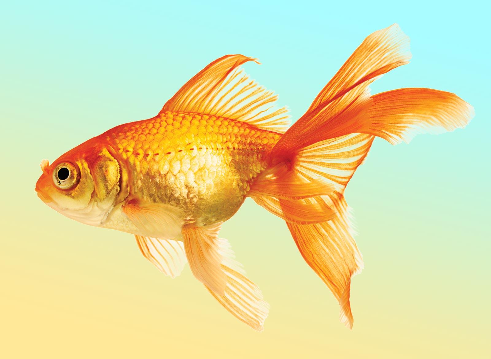 Анимация рыбки на прозрачном фоне, рисованные военные красивая